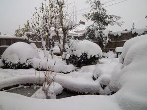 z snow