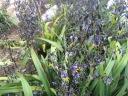 Oct flower 1