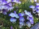Oct flower 2