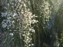 Oct flower 3