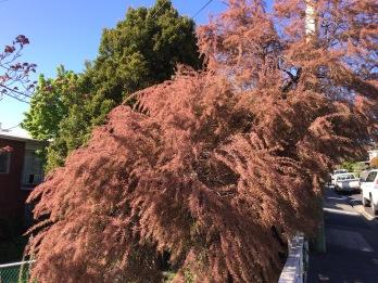 Oct tree 1