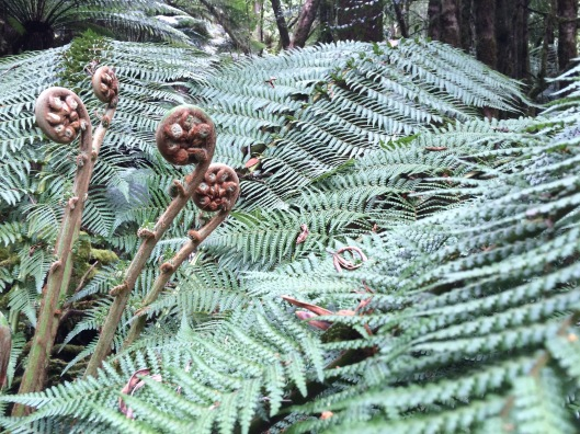 Oct tree fern
