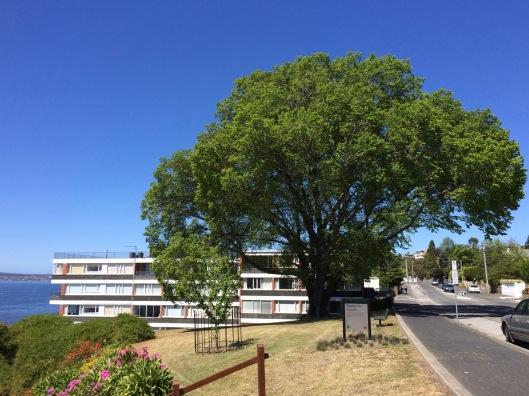 Oct tree