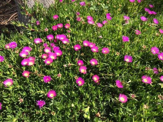 t flowers 1