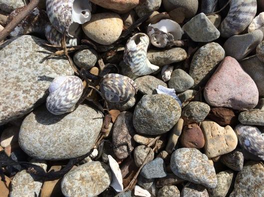 t pebbles