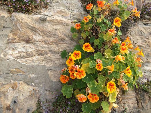 wall flower 3