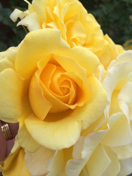 N flowers 1