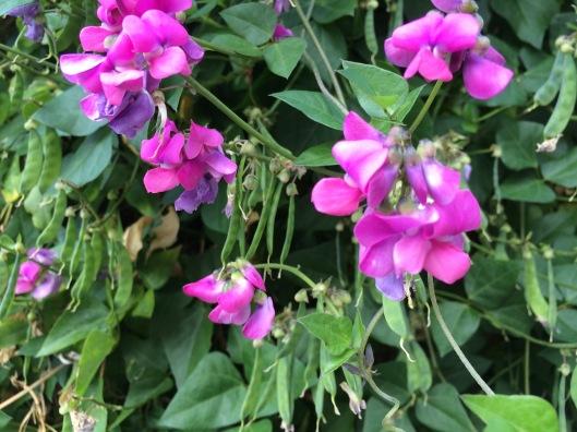 N flowers 2