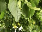 N tree 2