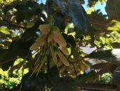 N tree 3