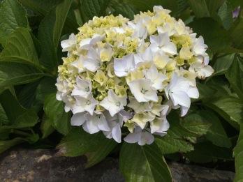 Dec flower 2