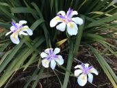 Dec flower 4