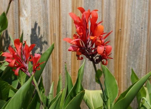 Jan flower 2