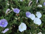 Jan flower 3