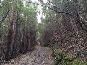 B path 2