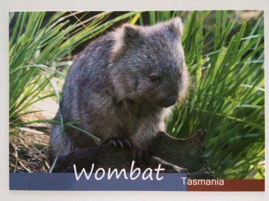 P wombat
