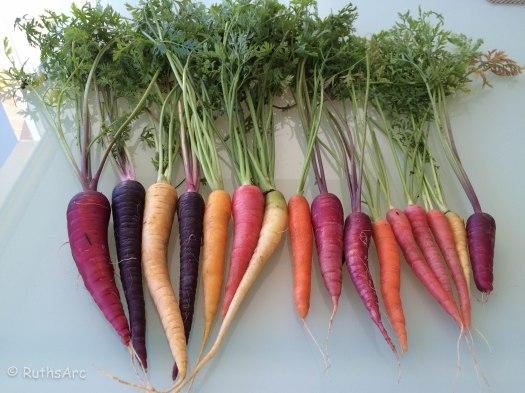 C carrots
