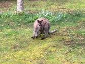 K kangaroo 3