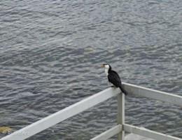 O bird