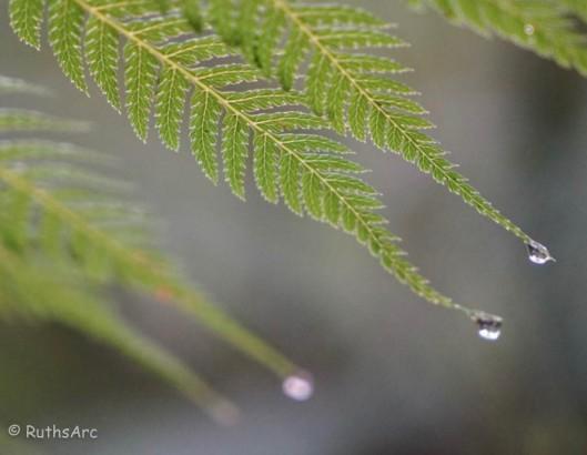 tree fern 1