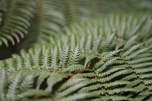 tree fern 3