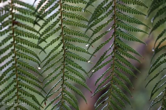 tree fern 4